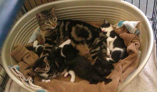 Mitos Kucing Melahirkan di Dalam Rumah