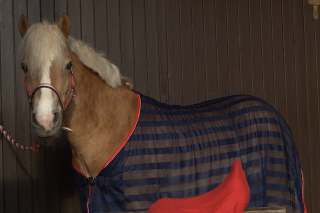 Yay Or Neigh? Consider These Factors Before Buying A Horse For The First Time