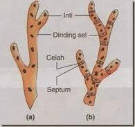 Ciri-Ciri dan Struktur Jamur
