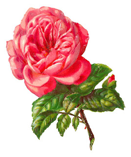 rose flower image