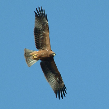 BOOTED EAGLE | XAMOBOX.BLOGSPOT.COM, RELAX
