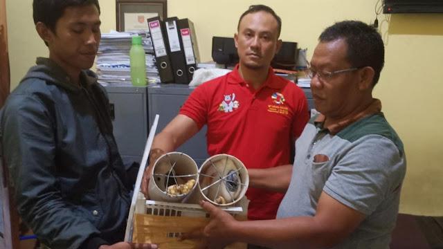 Pecinta Burung Jadi Modus Perdagangan Ilegal Kakatua Maluku