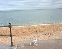 A fat seagull by the sea in Llandudno