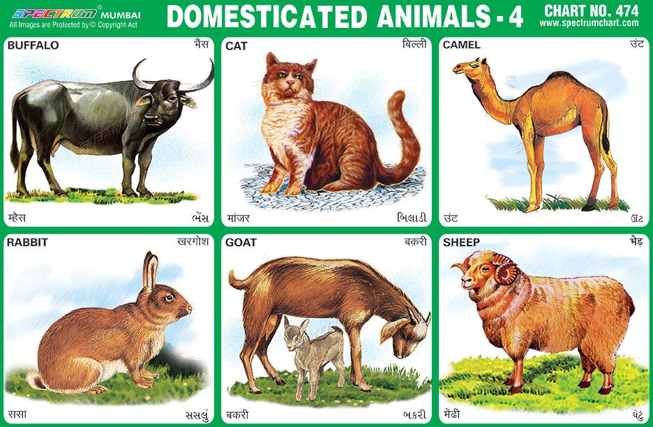 Purpose Of Cat In Animal Farm
