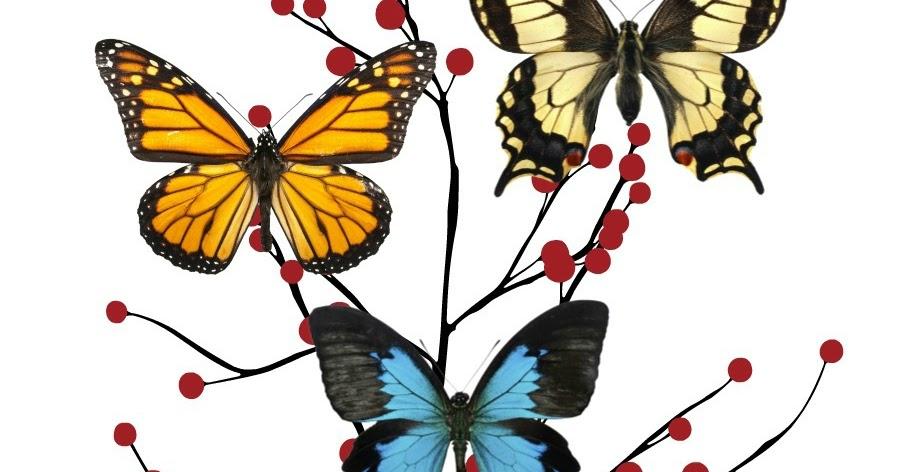 Food, Decor, Kids: Butterfly Home Decor