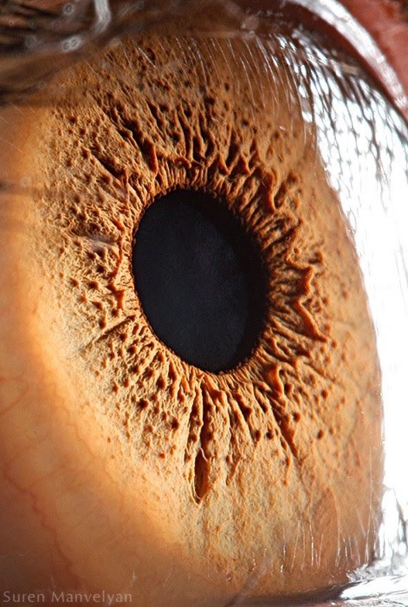 عينـــاك .. صدق او لا تصدق 121.jpg