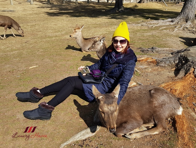 singapore travel blogger nara park japan deer