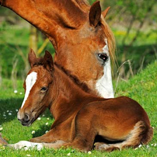 Greatmats Foaling Stall Safety Guide