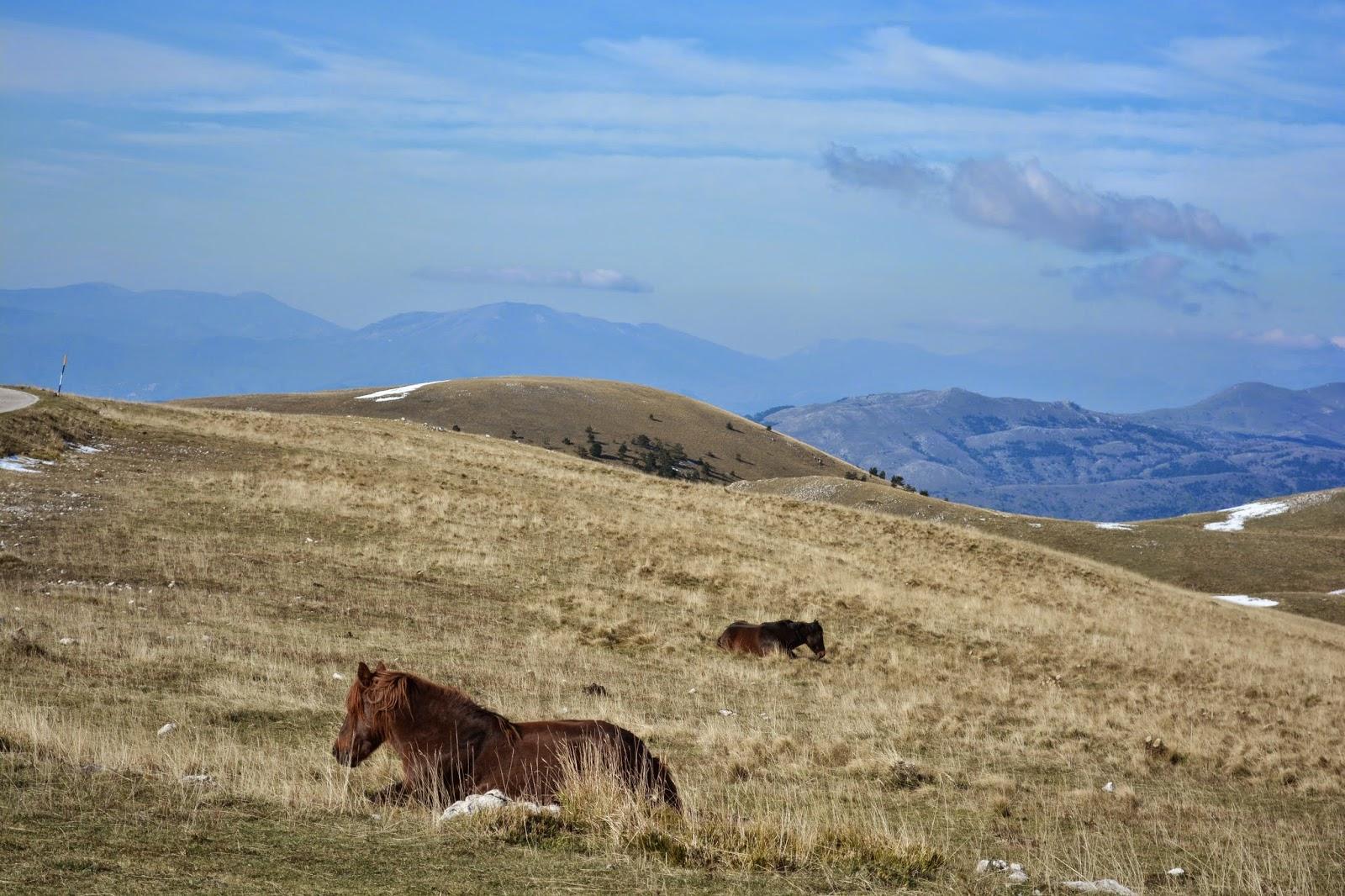 полу дикие кони на склоне горы в Италии