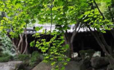daerah wisata populer di korea selatan