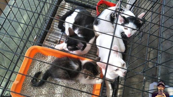 Elak Buang Anak Kucing Sesuka Hati