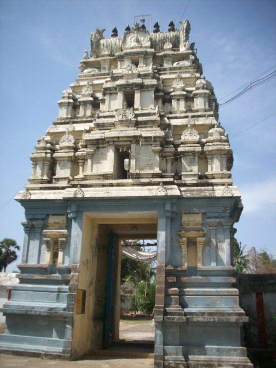 Azhinjal Tree - Nootreteeswarar Temple (Thiruvallur - Tamil