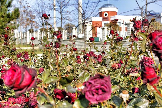Avdarma - Gagauzia - vedere spre centrul satului - blog FOTO-IDEEA