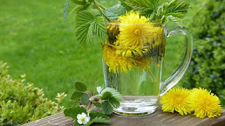 Dandelion-How to cure stomach Ulcers naturally
