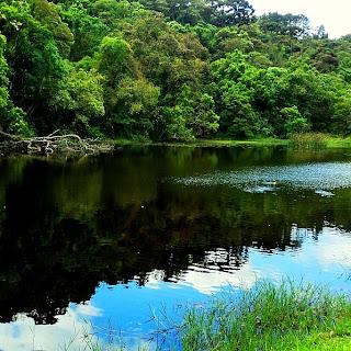 Lago das Carpas, no Parque da Cantareira