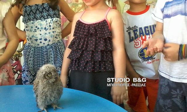 Μικρή κουκουβάγια βρήκε καταφύγιο σε παιδικό σταθμό στο Ναύπλιο