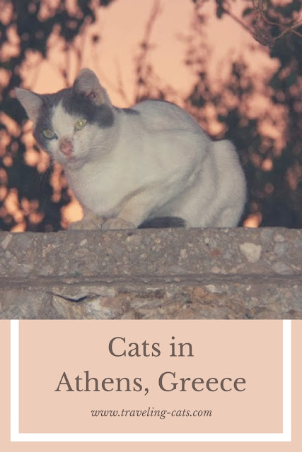 cats in athens