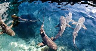 Karimunjawa National Park, The Definition Of An Exotic Archipelago