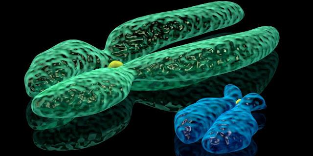Imagen de cromosomas acrocenticos