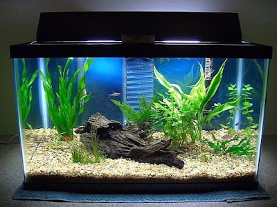 Untuk lantai aquarium dan juga kolam hias