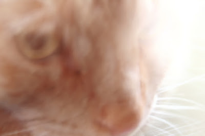 image of my cat with a lens aberration