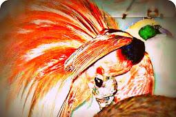 Tekan Perburuan, Seniman di Manokwari Siapkan Miniatur Burung Cenderawasih