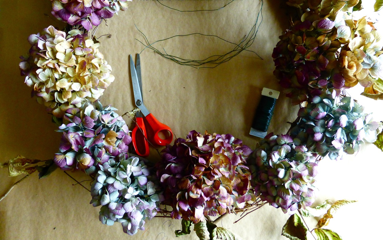 hydrangea wreath, do it yourself hydrangea wreath, how to make a hydrangea wreath, placement of flowers for a hydrangea wreath, dried hydrangea flowers