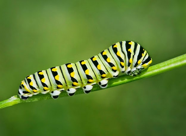 caterpillar-transformation-to-butterfly-1