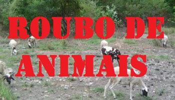 Resultado de imagem para FURTO DE ANIMAIS ovelhas