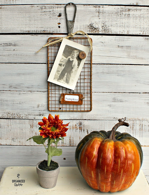 Repurposed Safety Grater Pumpkin Photo Holder Project www.organizedclutter.net