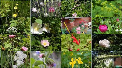 Blumen im naturnahen Garten im Juni