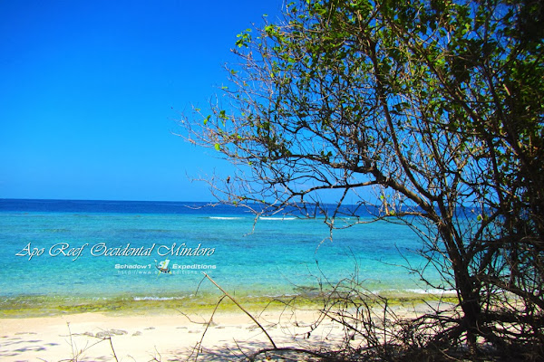 Apo Reef - 7 Serene Beaches in the Philippines - Schadow1 Expeditions