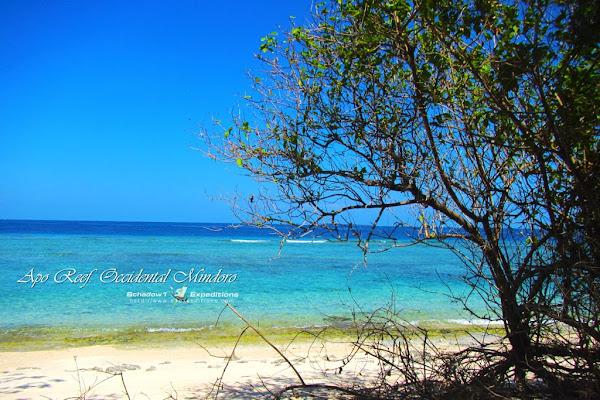 Apo Reef Island Beach - Schadow1 Expeditions