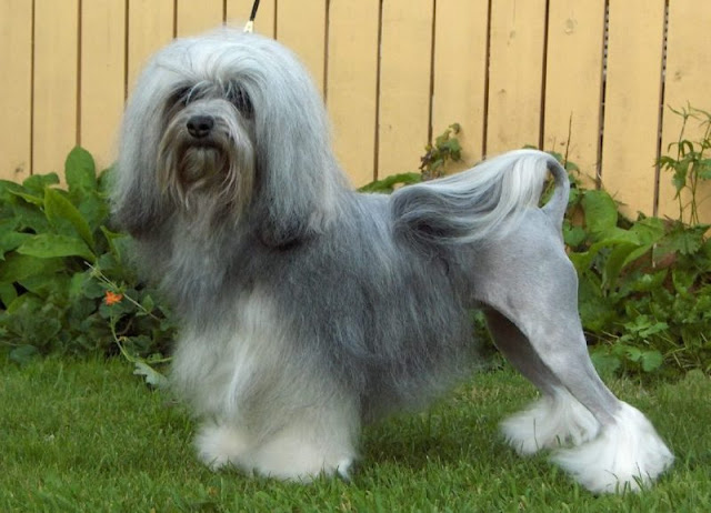 10+ Most Expensive Dog Breeds in the World | A Dog Blog