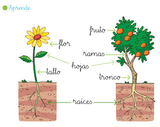 http://primerodecarlos.com/primerodecarlos.blogspot.com/febrero/plantas_partes.swf