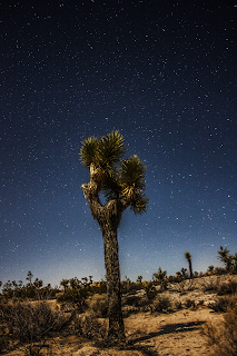 night sky image joshua tree national park
