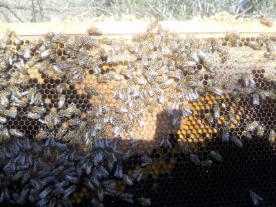 Πως ενισχύουμε τα μικρά μας μελισσάκια photos