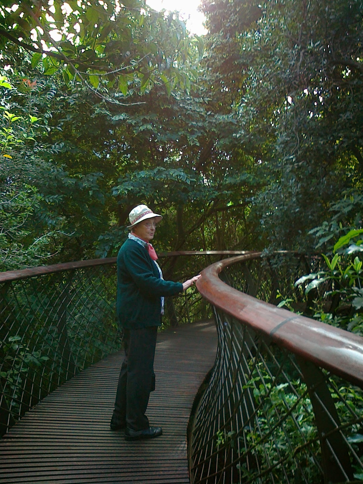 A Day In The Life The Tree Canopy Walkway At Kirstenbosch