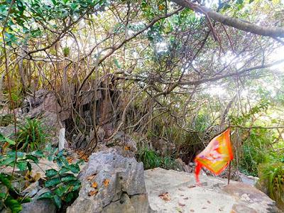 nature, nature trails, sky trail, #payabay, #payabayresort, paya bay resort, beauty,