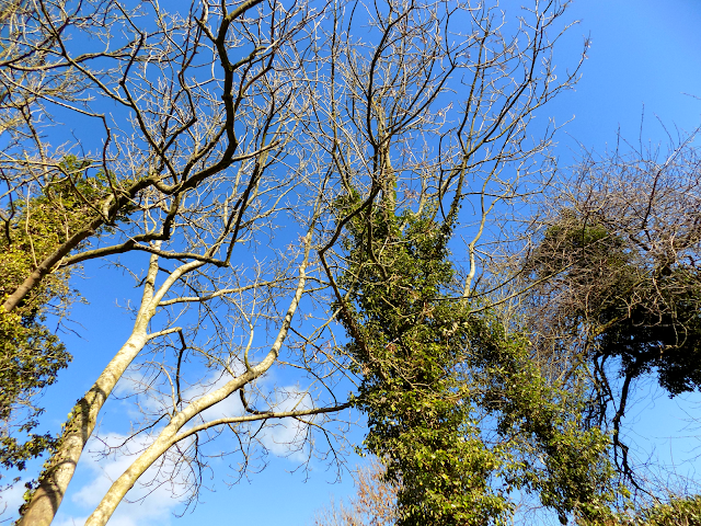 Blue sky & trees