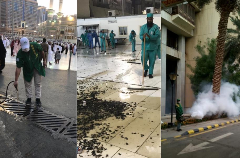 صراصير وحشرات غريبة تغزو مكة والمدينة وتمنع إقامة الصلاة في الحرم .. لأول مرة بالتاريخ