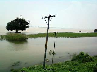 Trees in Flood of Bihar