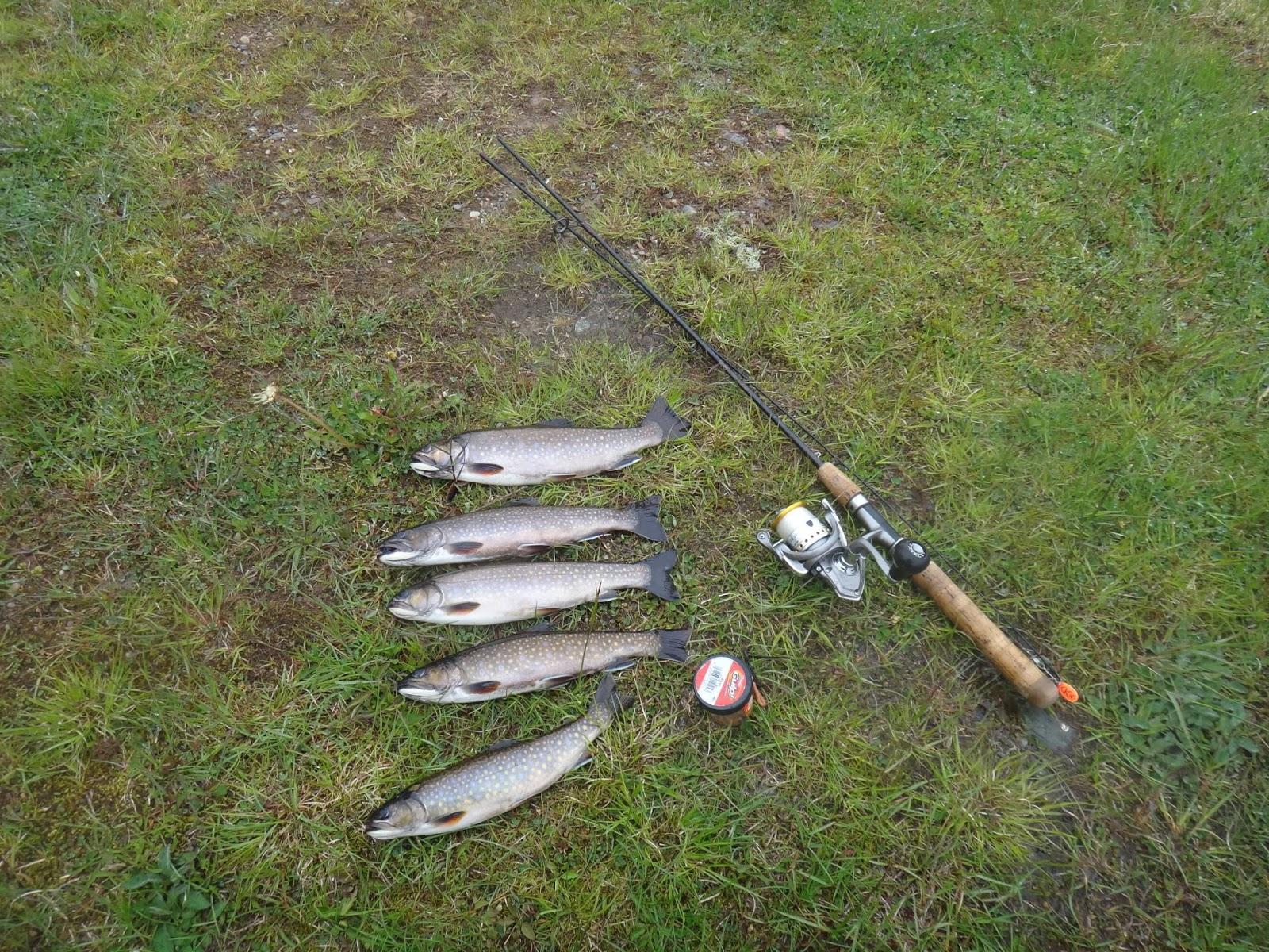 Framboise manor yep it 39 s still june and trout for Fish pedicure utah