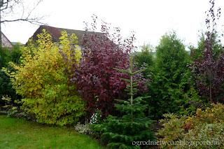 Ogród w jesiennej szacie 2007-2014- galeria zdjęć