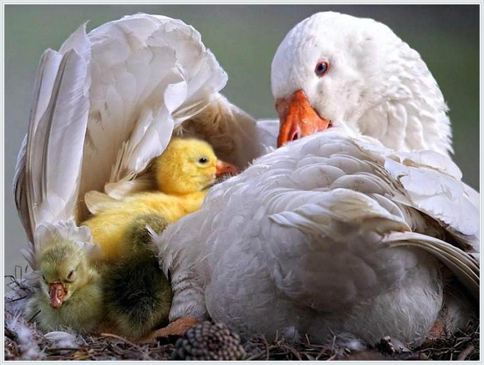 許瑞云醫師 : 祝福天下的母親--母親節快樂!!