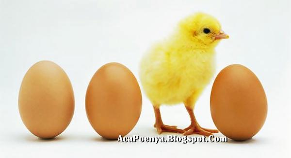 Mitos Tentang Telur Ayam