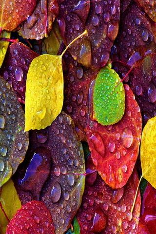 Fall Leaves Iphone 7 Wallpaper Busra Genc Telefon Duvar Kağıtları Arşivim 4