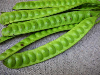 Petai Bean (Parkia speciosa) is Good For Pregnancy and Healthy