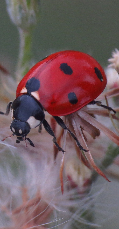 A lady bug up close.