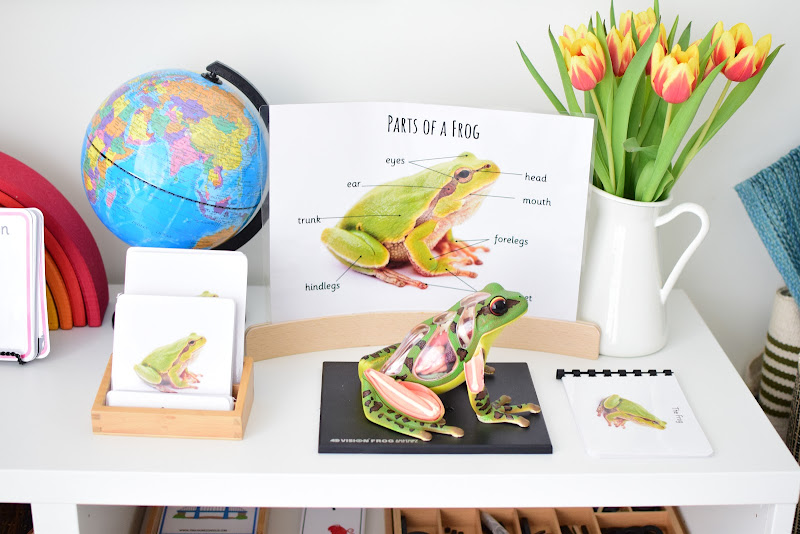 SPRING ACTIVITIES: LEARNING ABOUT FROGS